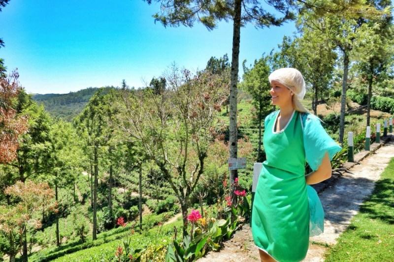NuwaraEliyaSriLanka Tea plantations