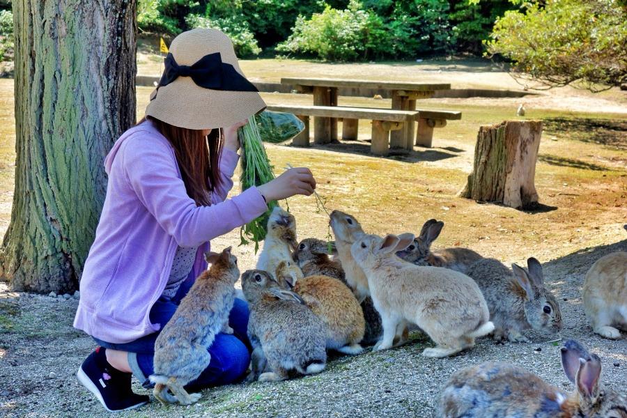 RabbitsEverywhereJapan