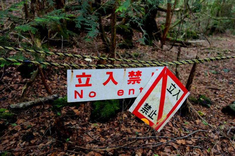 Journey to Suicide Forest – Aokigahara 3
