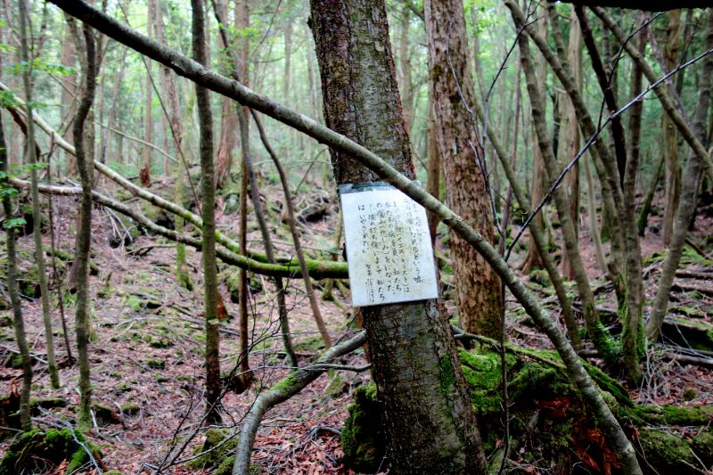 suicide note japan forest