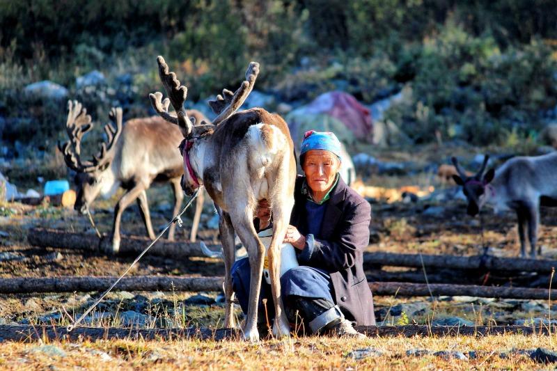Tsaatan people mongolia4