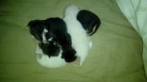 1+1=7cats (6)