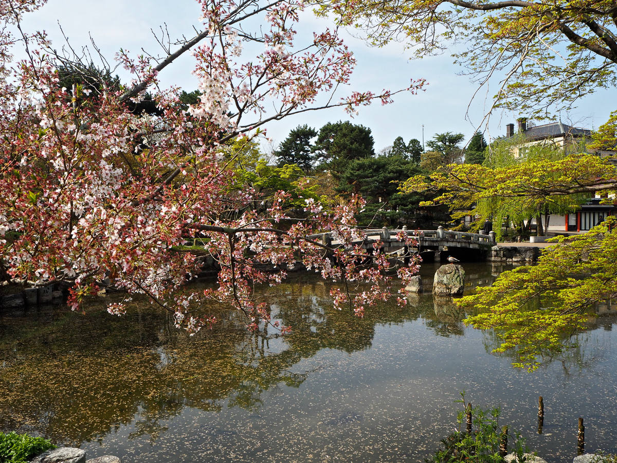 Kyoto City Guide Must See Sights
