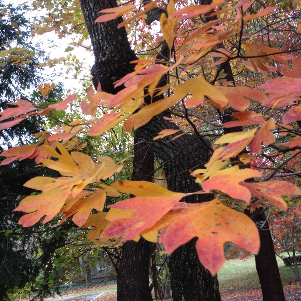 Native plants In their fall colors.  (3/3)