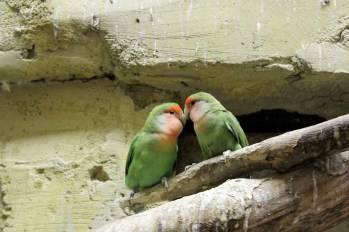Love birds. No, seriously! They are!