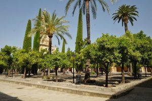 Cour des Orangers de la Mosquée-Cathédrale, Cordoue