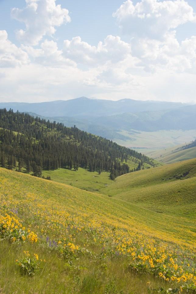 Bison National Range Flowers