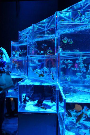 Summer in Japan - Art Aquarium