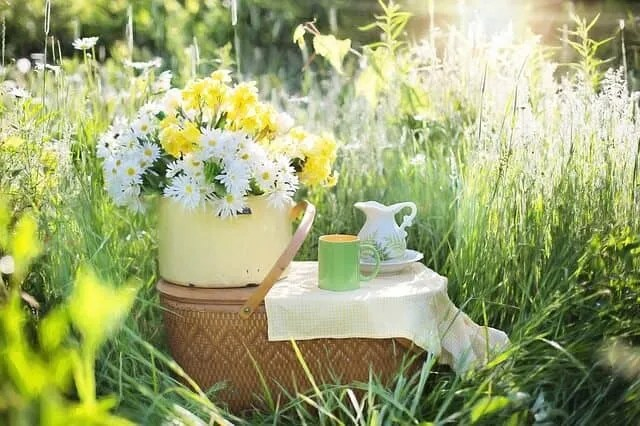 Herbal tea on a picnic basket outside in garden of daisies