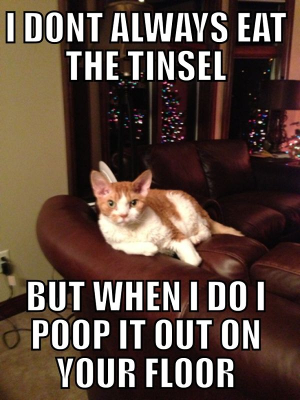 cat-humor-i-dont-always-eat-tinsel