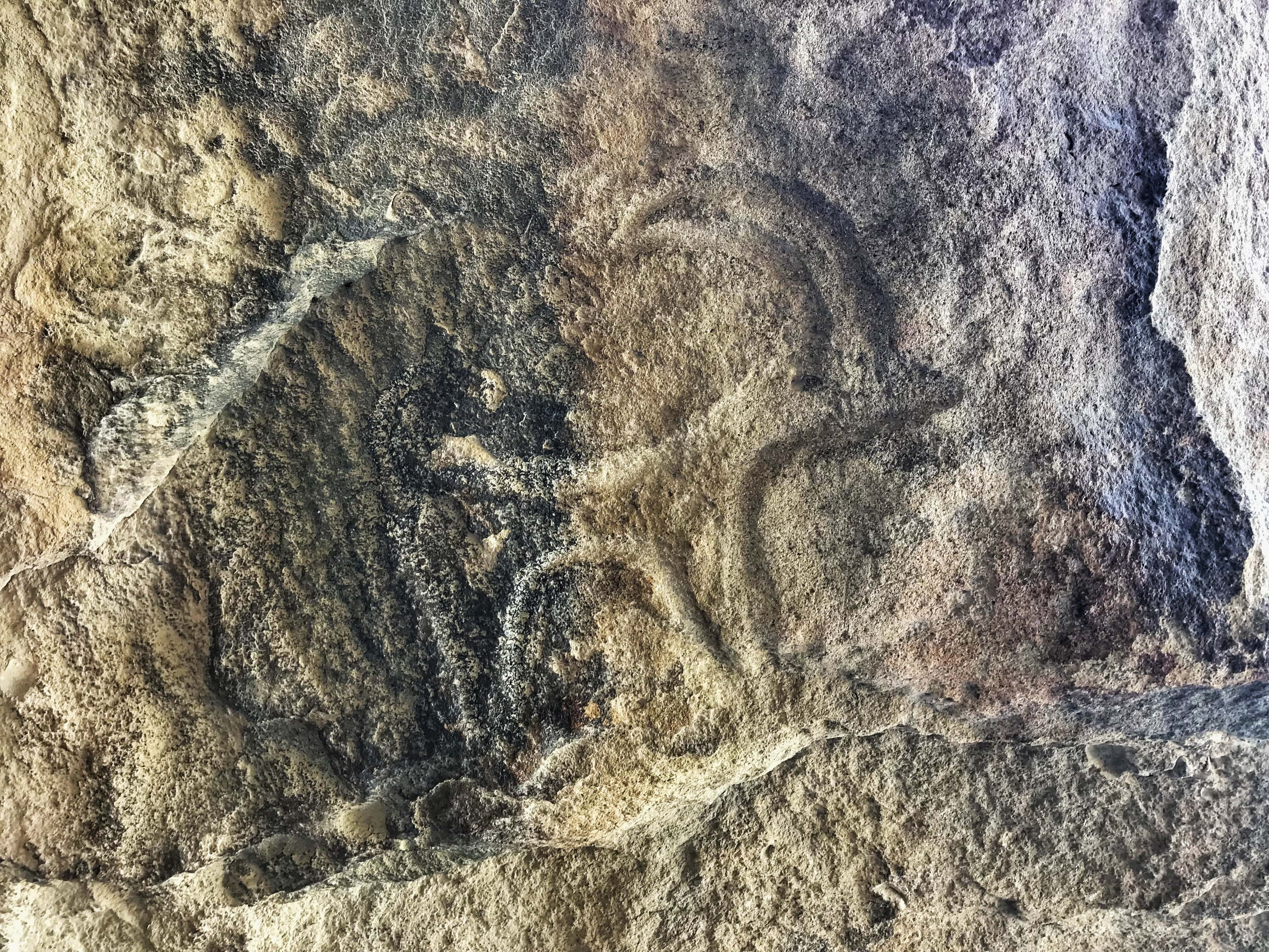 or just animals. These rock carvings date are nearly 5,000-20,000 years old!