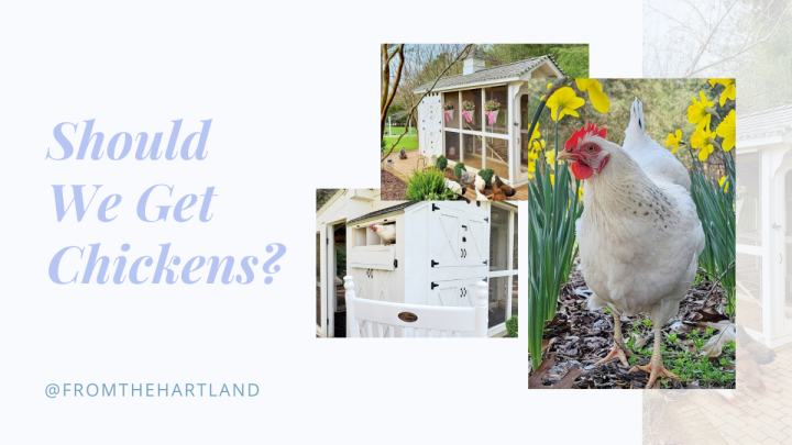 Should We Get Chickens?