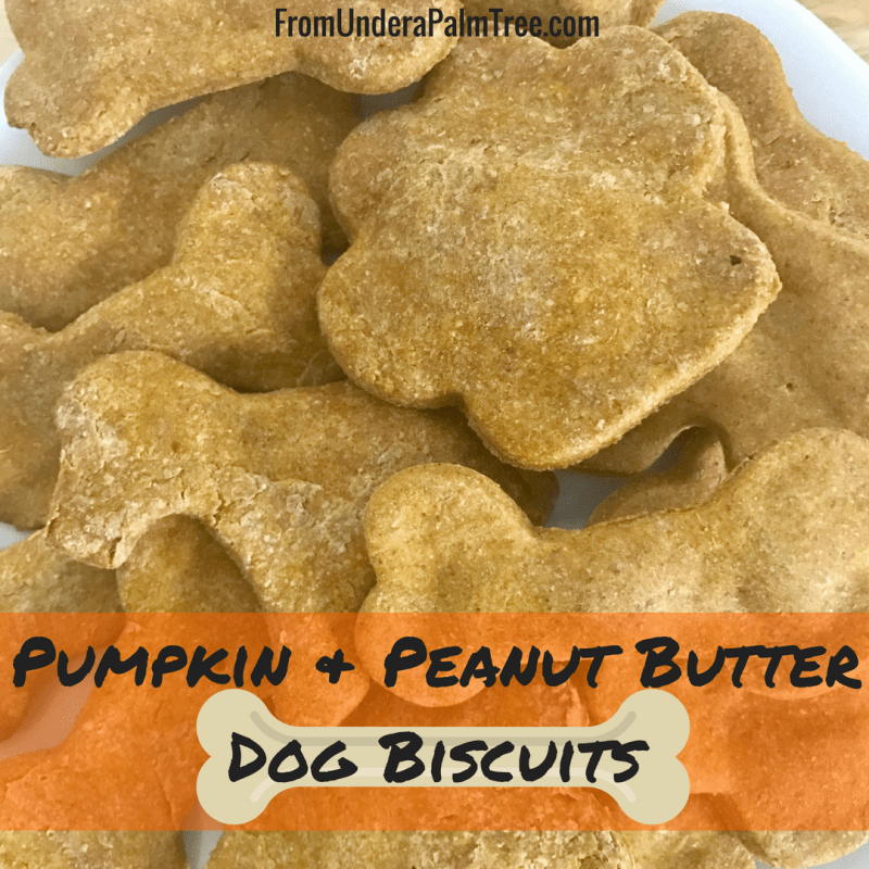 Pumpkin Peanut Butter Dog Biscuits by From Under a Palm Tree