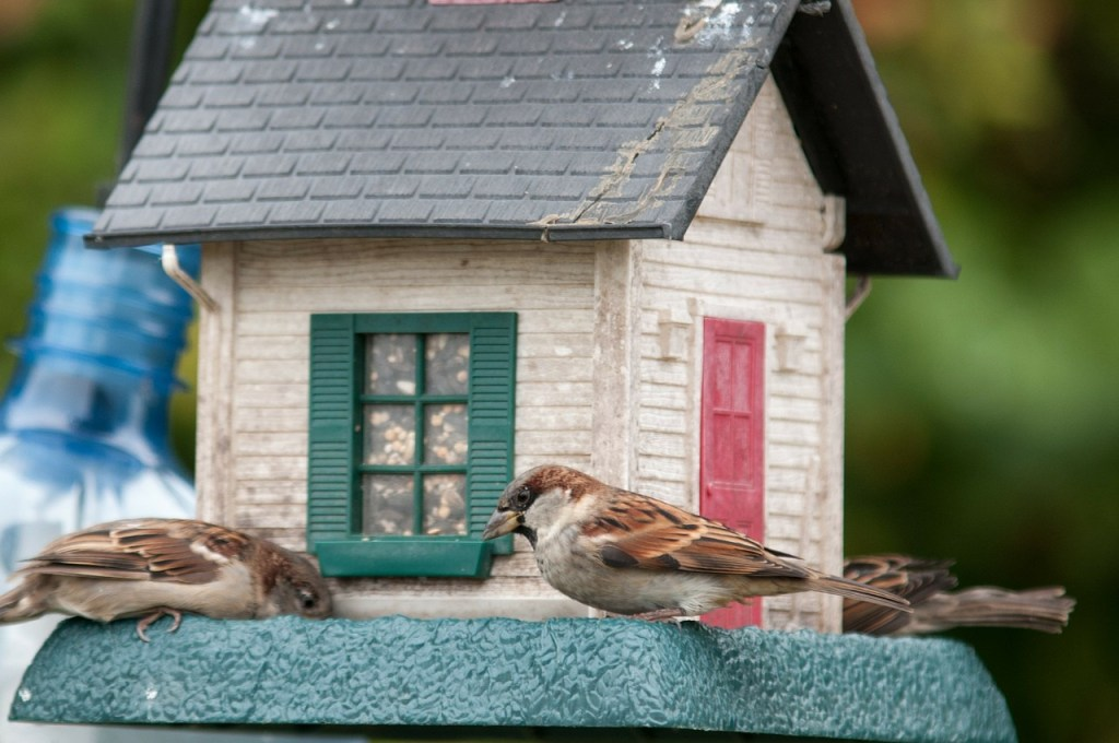 5 Ways to Keep Birds Safe & Healthy by From Under a Palm Tree