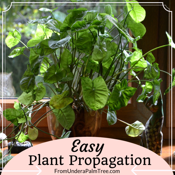 easy plant propagation | propagation | how to propagate plants | propagating plants | plant propagation | gardening | garden | garden hacks | gardening hacks | gardening ideas | plant transferring | potting plants | how to replant plants | flowers | houseplants |