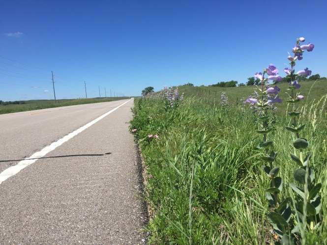 Sandhills Nebraska Road Wildflowers