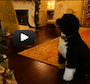 Bo checks out all the decorations for himself. Watch for the magic at 1:08.