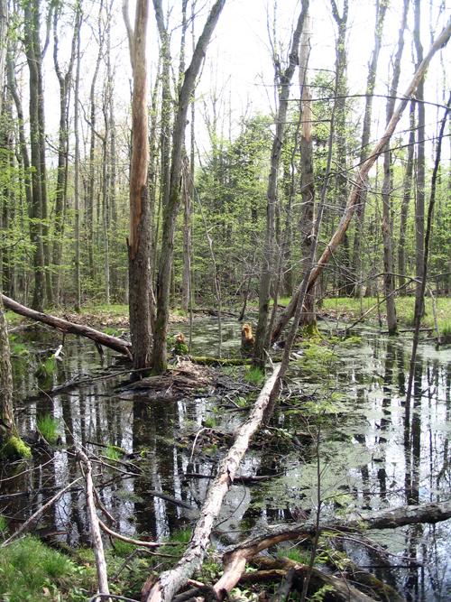 HELAswamp