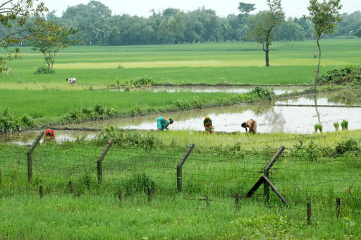 Campos de cultivo más allá de la frontera indobanglades�.