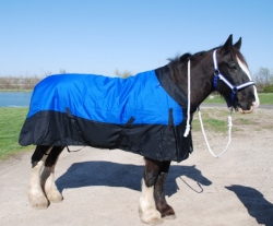 Draft Horse Waterproof Insulated Turnout Blanket 1200 Denier