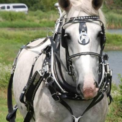 draft horse diamond parade harness