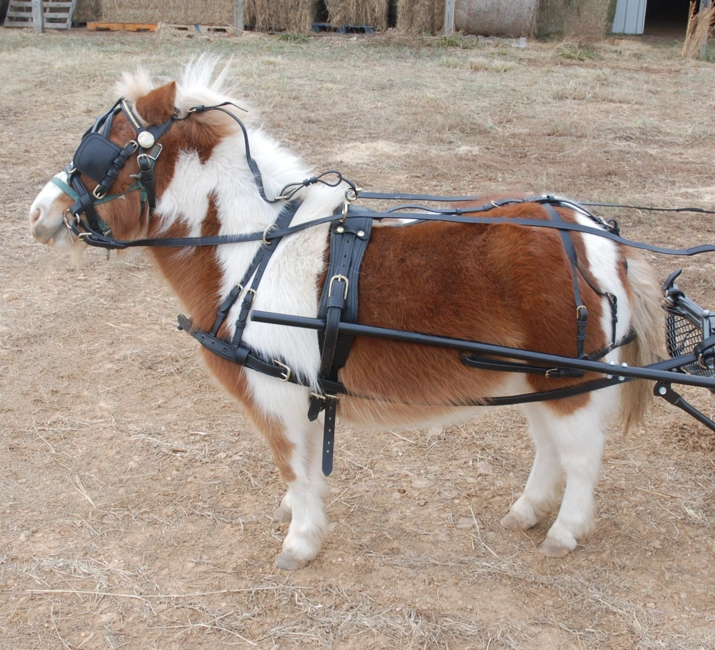 heavy duty leather mini horse harness frontier equestrian draft horse harness image at Horse Harness