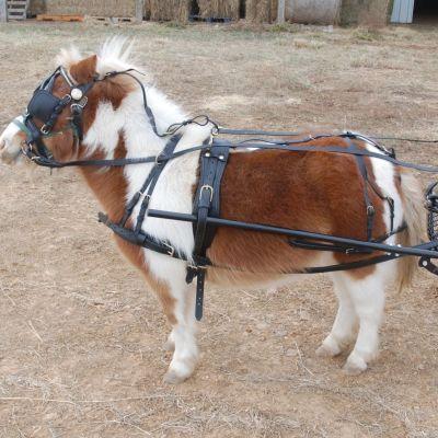 Heavy duty mini harness