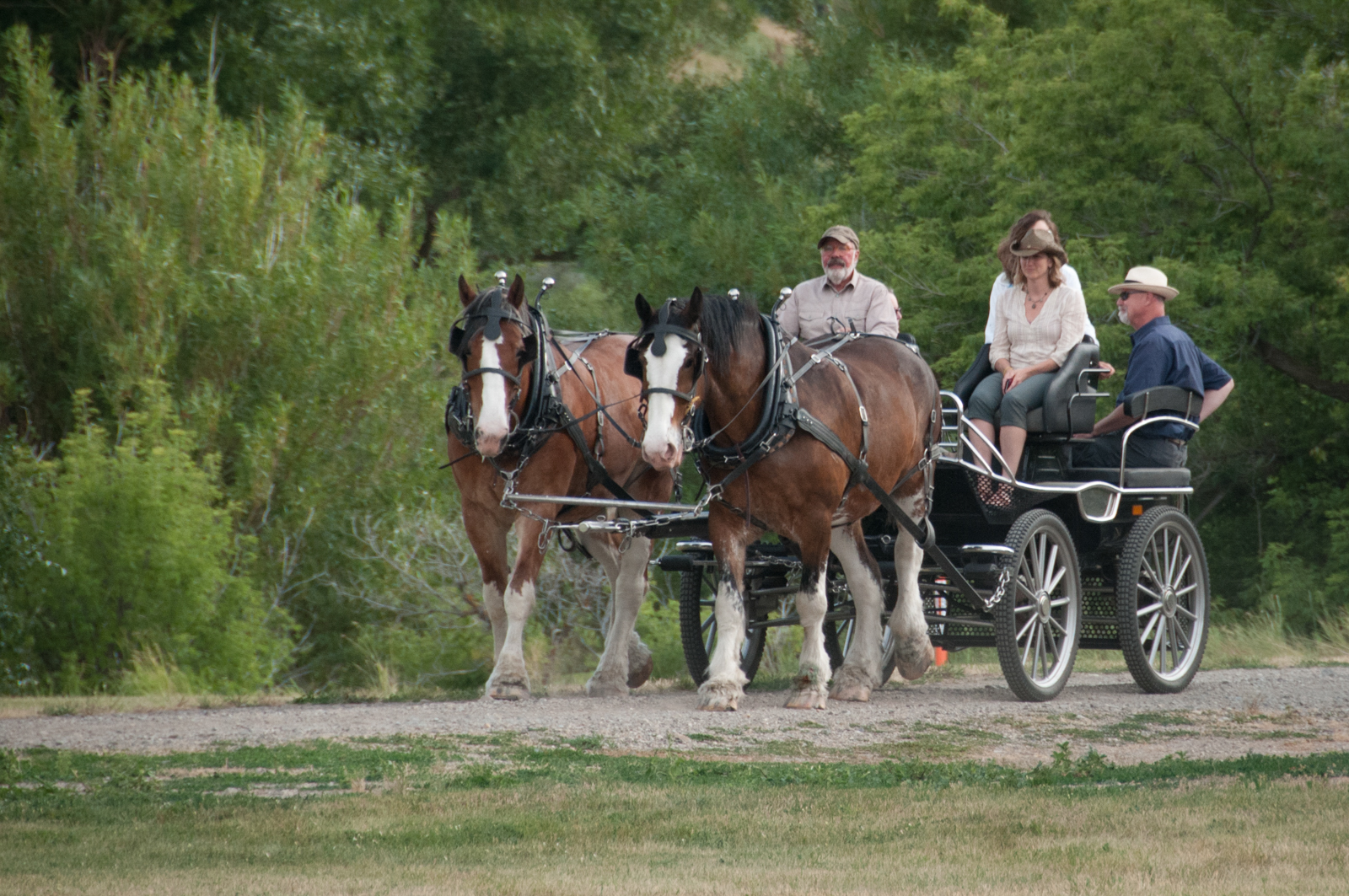 While some make dinner, others enjoy the company of retired Clydesdale horses