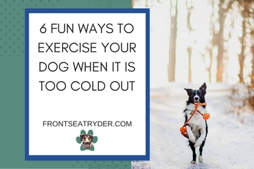 6 Fun Ways to Exercise Your Dog When It Is Too Cold Out