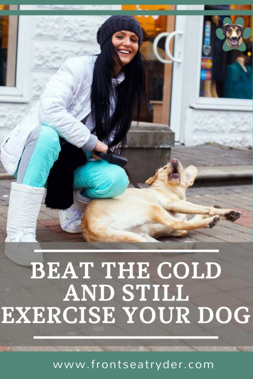 Ways to exercise your dog in the Winter