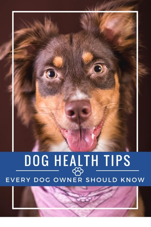 I would like to give a warm welcome to Ryan Ely fromwww.greatdogsupplies.com!Ryan is an avid Animal Lover who believes in helping animals any way he can. Ryan joins us today to guest post about dog health tips every dog owner should know!
