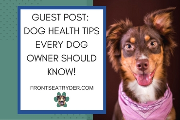 Guest Post – Dog Health Tips Every Dog Owner Should Know!