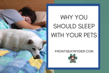 Why You Should Sleep With Your Pets