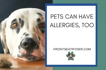 Pets Can Have Allergies, Too