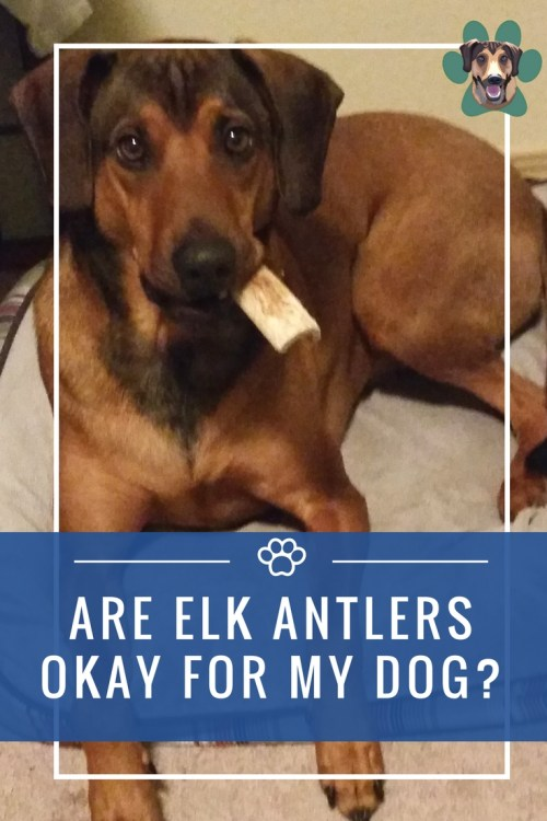 One of the biggest struggles I face with having a dog with food allergies is finding him treats that don't upset his tummy. Most of the time, I do without. The risk is too great for one little snack. But I have been on the prowl for the best bones for dogs with allergies.