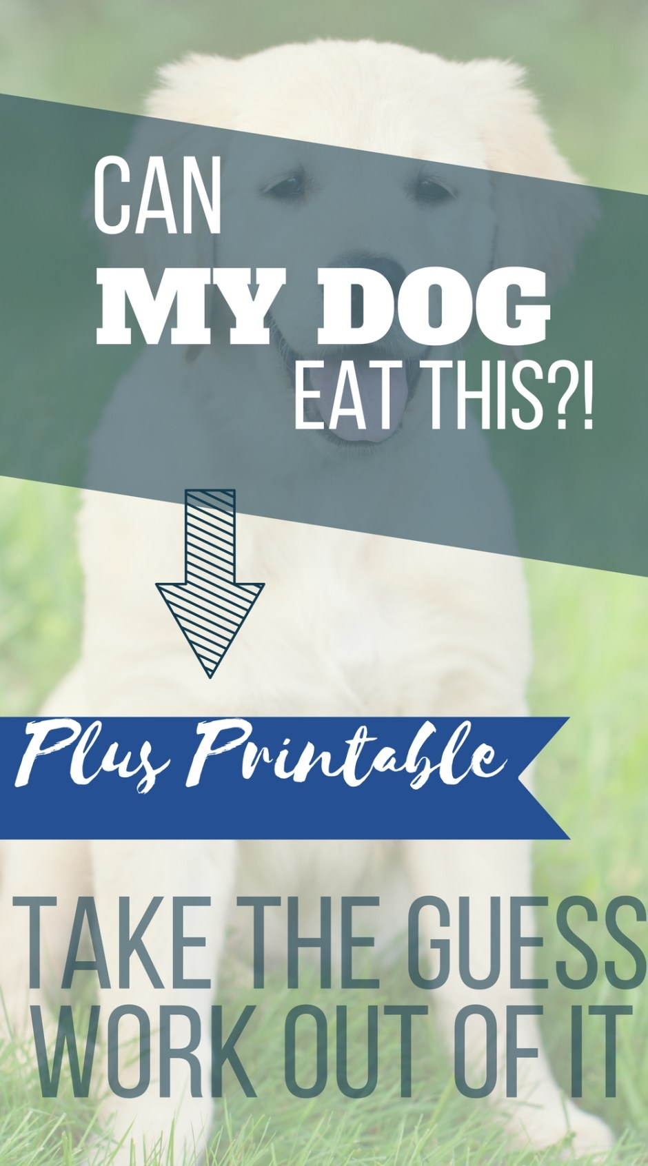 March is Pet Poison Prevention Awareness Month. So, I found it only fitting to talk about feeding your dog table scraps. It is a fairly controversial topic among dog owners and trainers. Do you ever wonder,