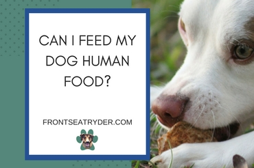 Can I Feed My Dog Human Food?