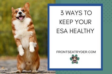 How to Keep Your ESA Healthy