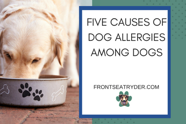 Five Causes of Food Allergies Among Dogs