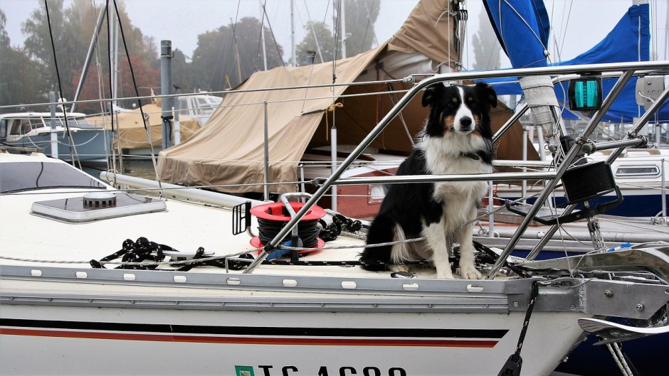 dog on a boat