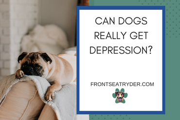 Can Dogs Really Get Depression?