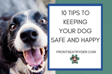 10 Tips to Keeping Your Dog Safe and Happy