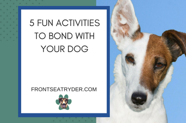 5 Fun Activities to Bond with Your Dog