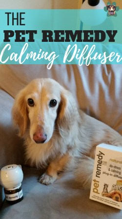 """The Pet Remedy calming diffuser and spray claim to be a """"clinically proven blend of Valerian, Vetiver, and other calming essential oils."""" These oils work together to calm and distress your pets. Here is what happened when I used it on my roommate's very anxious dog."""