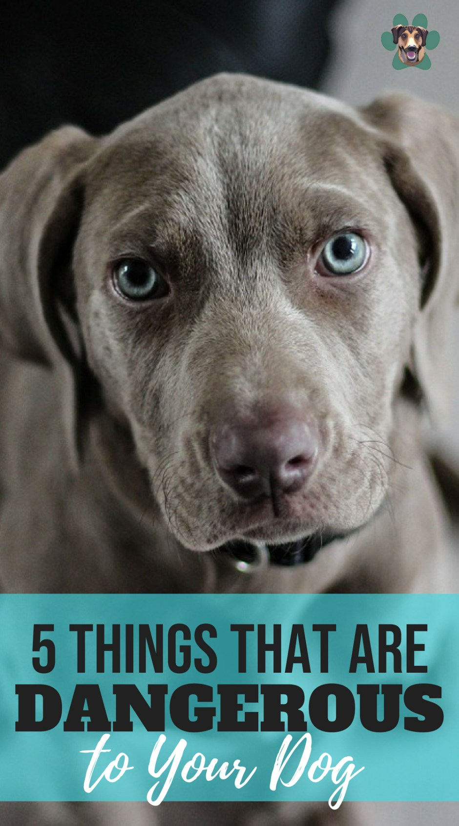 5 Things That Are Dangerous to Your Dog
