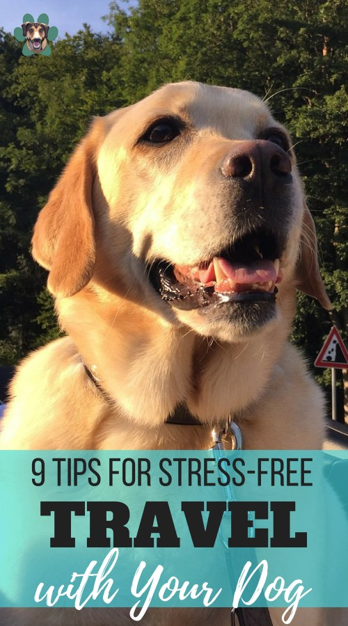 Traveling with your dog can come with complications. In fact, it can get to a point where you might prefer to leave your pup at home. It all depends on where you're going, but here are 9 tips for stress-free travel with your dog.