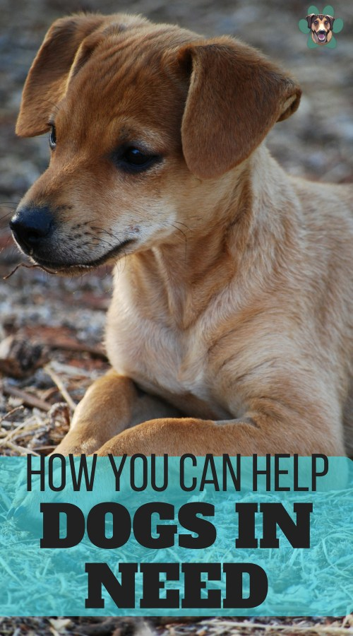 You might not be able to change the world and instantly rehome every dog, but there is something that we can all do. Here are some of the ways you can help dogs who need it most.