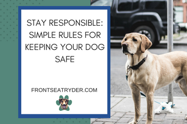 Stay Responsible: Simple Rules For Keeping Your Dog Safe