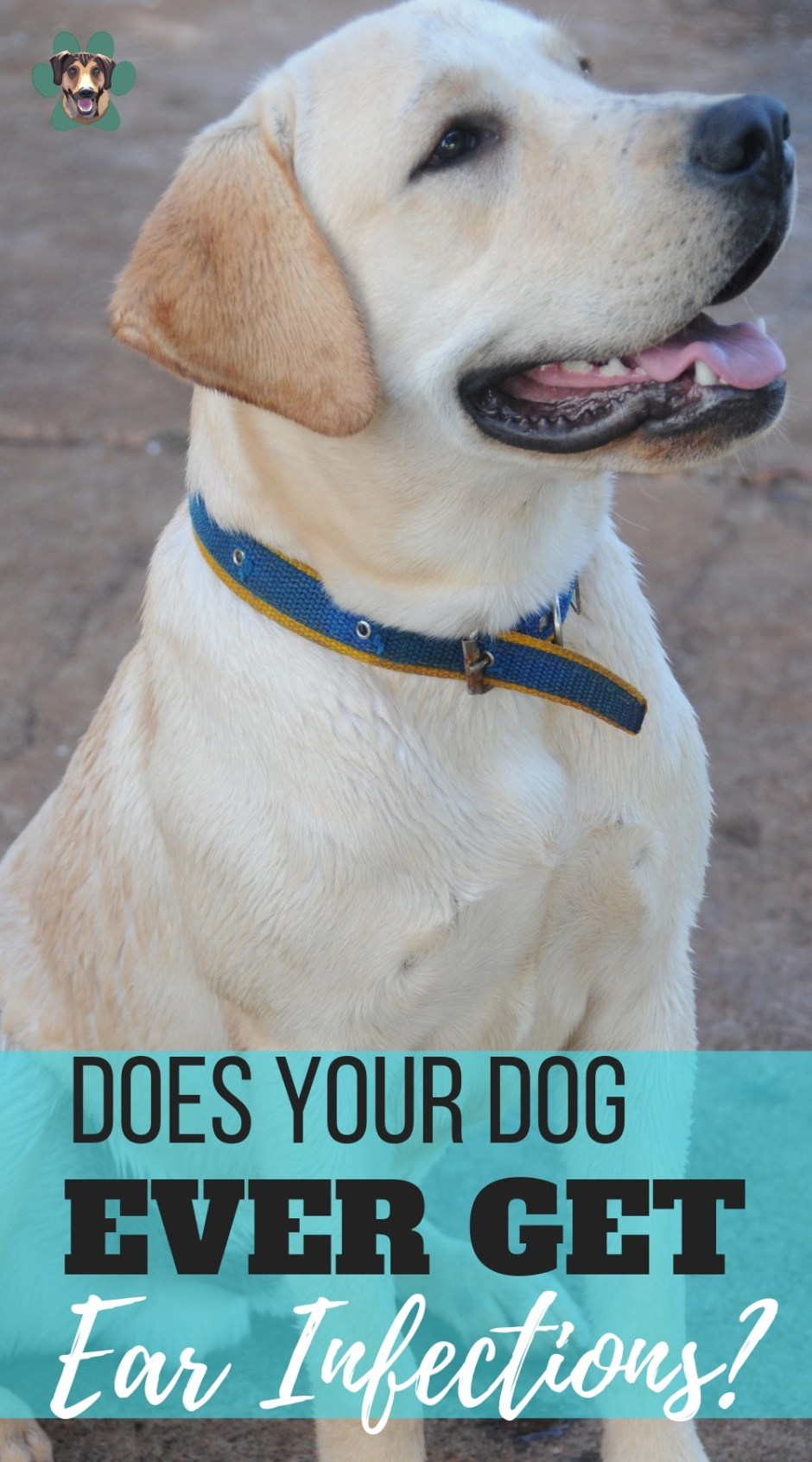 One of the widely known canine health problems is dog ear infection and if we don't take care of it properly, they can become one of the hardest canine problems to deal with. They can repeat again and again, for years… Ear infections do not spontaneously occur. So how do you deal with dog ear infections?