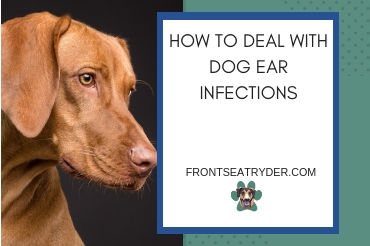How To Deal With Dog Ear Infections